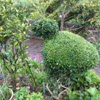 雨戸の取替え / 変わった植木